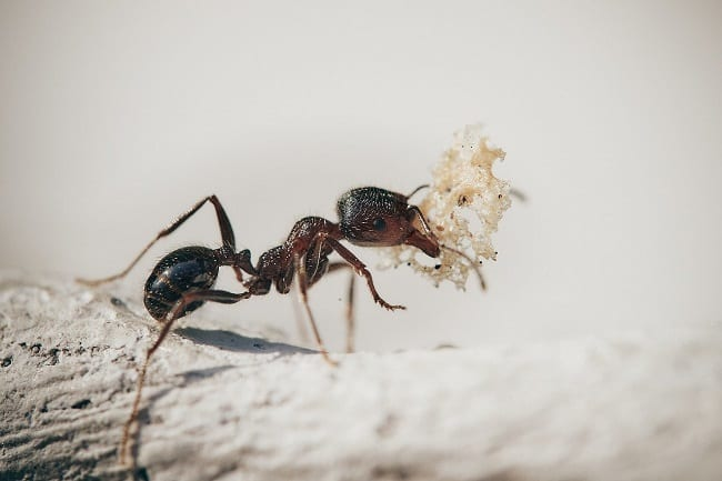 How to Eliminate Ant with Vitamin C and Baking Soda Method