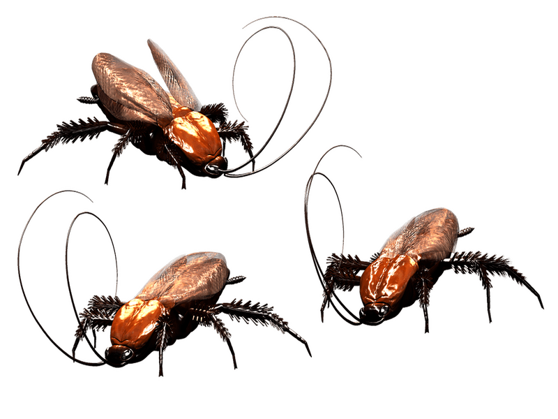 How to Get Ride of Cockroach from the Kitchen Cabinet